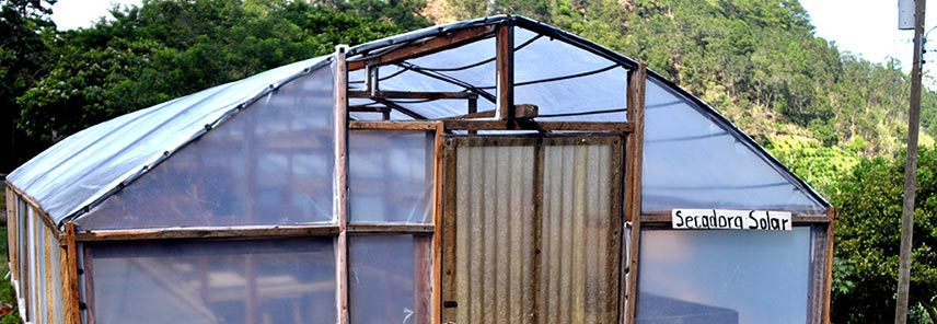 Solar drier for unhulled coffee